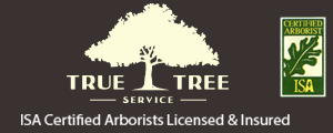 True Tree Service Miami